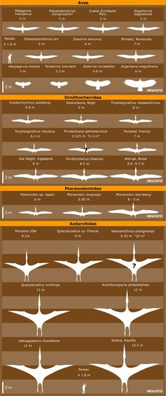 Aves voladoras gigantes y Pterosaurios por Rexisto