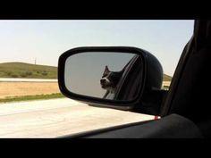 Dog Vs Cars