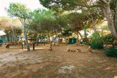 Camping Torre del Porticciolo,Alghero