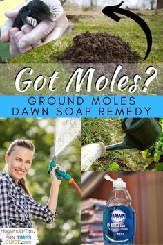 As an entomologist and pest control expert specializing in both urban pests and agricultural pests for the past 25 years, I'm going to show you how to get rid of moles in your yard - from my most favorite to my least favorite methods. Lots of ground mole removal methods ranging from mole poison and baits more humane options. I'll even show you how to get rid of ground moles naturally using items you already have at home -- like Dawn dish soap and a garden hose! #homemaintenance #landscaping Getting Rid Of Gophers, Getting Rid Of Mice, Garden Yard Ideas, Lawn And Garden, Mole Removal Yard, Natural Mole Removal, Moles In Yard, Mole Repellent, Skin Moles