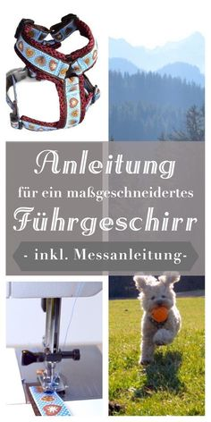 Free instructions for a customized dog harness! DIY beginner tu … – needle &… Free instructions for a customized dog harness! Cat Supplies, Dog Harness, Dog Toys, Animals And Pets, Best Dogs, Cute Dogs, Your Dog, Dog Lovers, Dog Cat