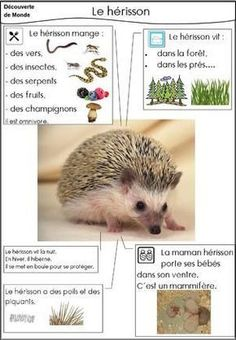 Le hérisson - Science and Nature Animal Facts For Kids, Fun Facts About Animals, List Of Animals, Animals For Kids, Animal List, Science For Kids, Science And Nature, Grade 2 Science, Montessori Science