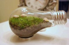 Lightbulb mini terrariums