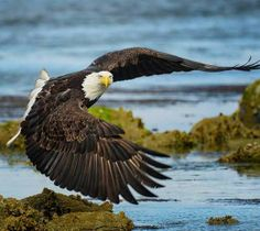Eagle Images — MUG Korea — Medium