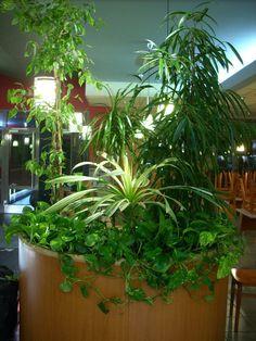 Indoor plants installation by ROSMARINO