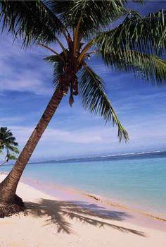 palm trees | palm tree.jpg