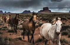 """""""45,000 Wild Horses to Be Killed by the US Government""""---""""A government board just recommended that 45,000 wild horses and burros be killed to make room for beef mega farms."""" This is devastating!"""