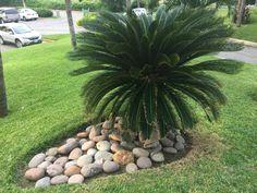 Plants, Decorative Pebbles, Gardens, Projects, Flora, Plant, Planting
