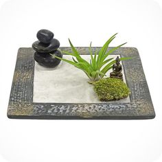 ZEN BUDDHA GARDEN - zen garden, air plant terrarium, feng shui terrarium, zen buddha, buddha, terrarium, terranium, sand art, gifts for him on Etsy, $40.00
