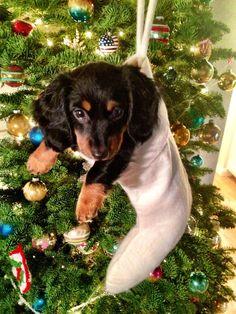 Best stocking stuffer ever!