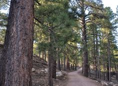 """Dogs allowed on some hiking trails at Grand Canyon National Park. Read more about park trails in """"Hittin' the Trail: Day Hiking Grand Canyon National Park."""""""