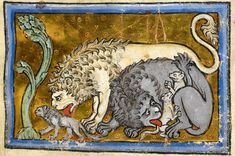 Lions licking their cubs. Bestiary, England ca. 1200-1210 (British Library, Royal 12 C XIX, fol. 6r)