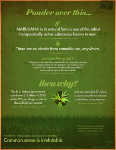 Marijuana Facts Infographic – The Hidden Agenda Behind the War on Drugs. It's time to get real people... Seriously | Google #1Cure4Cancer