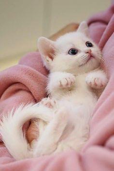 Cute Little Kittens, Cute Baby Cats, Cute Little Animals, Cute Cats And Kittens, Kittens Cutest, Cute Dogs, Pretty Cats, Beautiful Cats, Animals Beautiful