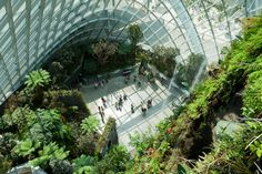 Cooled Conservatories, Gardens by the Bay - Google Search