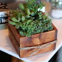 boxed succulents