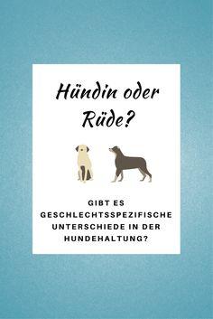 Hündin oder Rüde? Gibt es geschlechtsspezifische Unterschiede in der Hundehaltung?