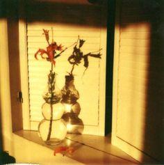 Andre Kertesz, Polaroid