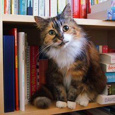 『世界で一番美しい猫の図鑑』の写真展が7/27〜開催。舶来猫ベッドの展示販売も StartHome
