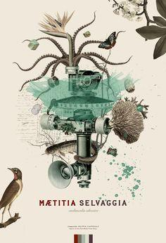 Maetitia Selvaggia (sistells)