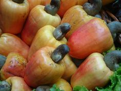 For those of us living outside the tropics, here's a snapshot of the cashew fruit. Cool, eh?!
