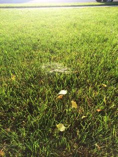 What webs in your grass mean and how to get rid of them
