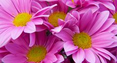 Tui Garden | Flower Growing Guide