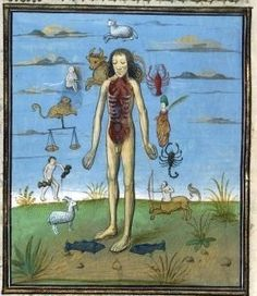 """If a living system is suffering from ill health, the remedy is to connect it with more of itself. French Illustration, Alchemy Symbols, Medical Anatomy, Astrology Numerology, Anatomy Art, Body Systems, Middle Ages, Astronomy, Renaissance"