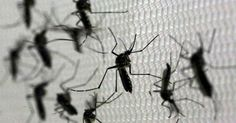Unicamp, USP e Unesp se unem e criam força-tarefa contra zika vírus