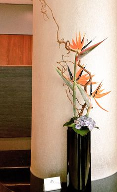 Corporate design, hotel flowers. Birds of Paradise, Strelitzia, Hydrangea.