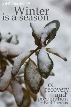 snow covered azalea leaves with Paul Theroux quote