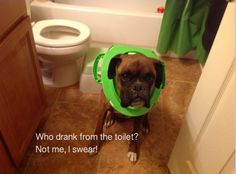 Who drank the water