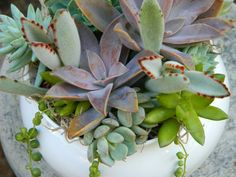 Time to pot my succulents...