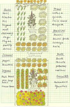 Planning a herb and vegetable garden.