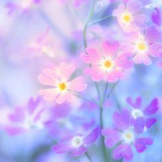 TINY LITTLE FLOWERS