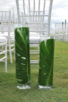 submerged monstera leaf - Google Search