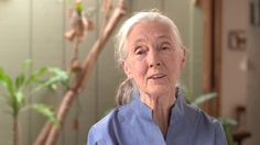 Dr. Jane Goodall's Video Message for the 2012 UN International Day of Peace by the Jane Goodall Institute.