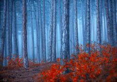 Original Abstract Photography by Igor Vitomirov Foggy Forest, Misty Forest, Canvas Wall Art, Wall Art Prints, Abstract Photography, Digital Photography, Color Photography, Nature Posters, Art Posters