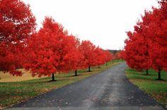 Autumn. Autumn. Autumn.