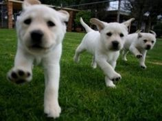 The 15 cutest puppy stampedes you'll ever see