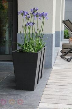 Toronto Bloempot Love Garden, Garden Pool, Garden Beds, Container Plants, Container Gardening, Front Door Planters, Plant Box, Garden Architecture, Backyard