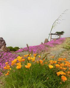 Springtime in Big Sur
