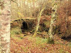 Ribera Del Río Sesín  . . . #Galicia #otoño #autumn #nature #naturaleza
