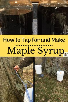 Tapping maple trees and making maple syrup is an amazing skill to learn! Let me teach you the process, check out my tutorial! Maple Syrup Taps, Tapping Maple Trees, Homemade Maple Syrup, Canning Tips, Elderberry Syrup, Sugaring, Wild Edibles, Skills To Learn, Preserving Food