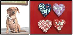 Doggies like Valentine's day gifts too!