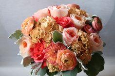 David Austin peach garden roses, peach ranunculus, coral dahlias, tea stained hydrangea, roses, and dusty miller. YUM