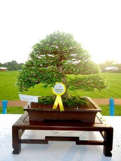 Bonsai Haus bonsai bonsai bonsai and plants