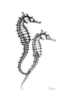 Art Print: Sea Horse Twins Art Print by Albert Koetsier by Albert Koetsier : Seahorse Tattoo, Seahorse Art, Seahorses, Art For Sale Online, Frames For Canvas Paintings, Affordable Wall Art, Cool Posters, Buy Posters, Find Art