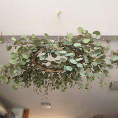 eucalyptus garland chandelier - Google Search
