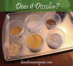 Summer Science - What Dissolves in Water?